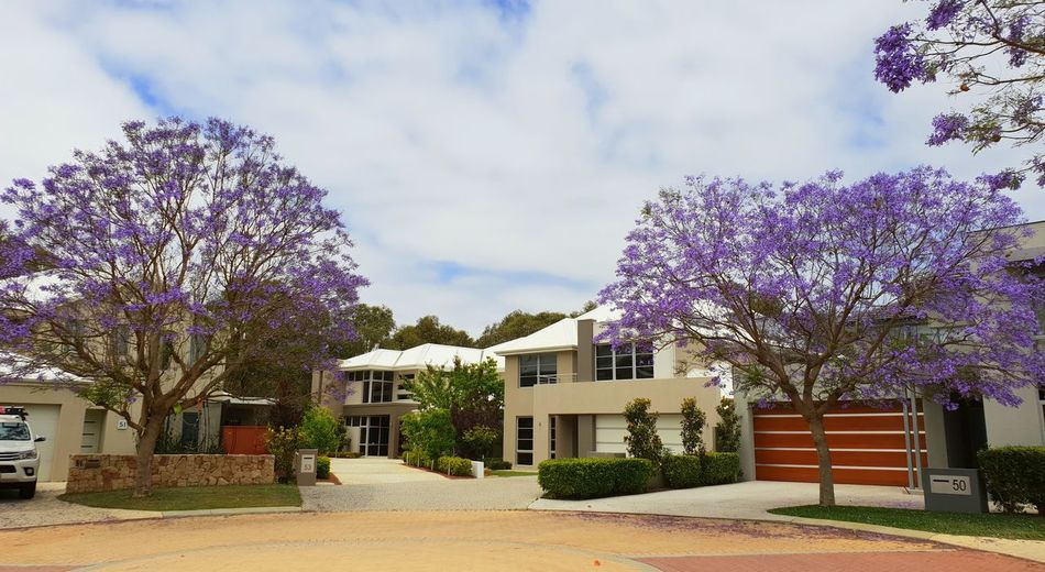 Jacaranda Hanging Out Home Building Exterior Architecture Built Structure Plant Tree Building Flowering Plant Flower Nature Sky Growth House Cloud - Sky Beauty In Nature Outdoors Day Entrance Residential District Purple