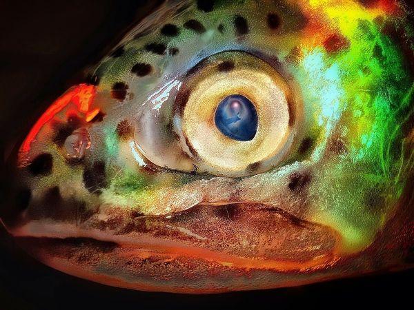 Fish Fisheye Fishhead