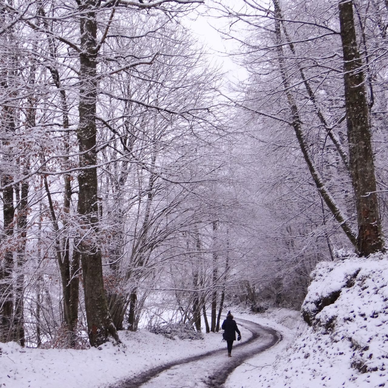 Woman Walking On Road Amidst Trees During Winter