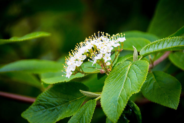 Animal Themes Animal Wildlife Animals In The Wild Beauty In Nature Bee Blooming Close-up Day Flower Flower Head Fragility Freshness Green Color Growth Insect Leaf Nature No People One Animal Outdoors Passion Flower Petal Plant Pollination