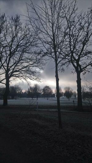Tree Sunset Fog