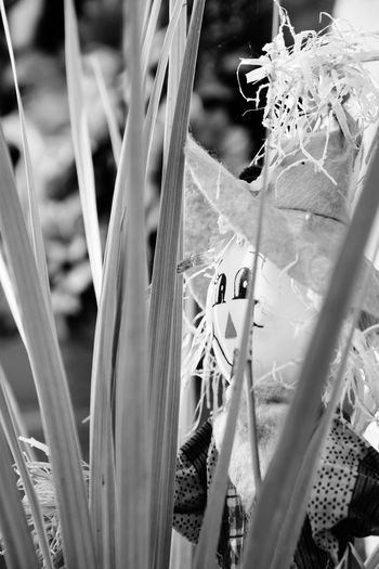 Lurker. Plant Growth Leaf Close-up No People Outdoors Vertical Bnw_friday_eyeemchallenge Halloweenchallenge Halloween Fall Autumn Decoration Scarecrow Depth Of Field Selective Focus Marietta Pennsylvania Black And White Monochrome Photography Monochrome EyeEm Best Shots