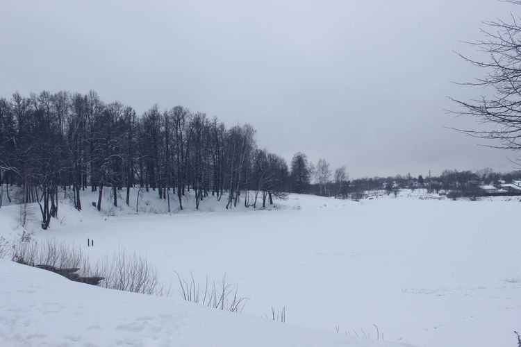 Cold Temperature Coniferous Tree Day Evergreen Tree Forest Landscape Nature No People Outdoors Sky Snow Snowing Tree Winter