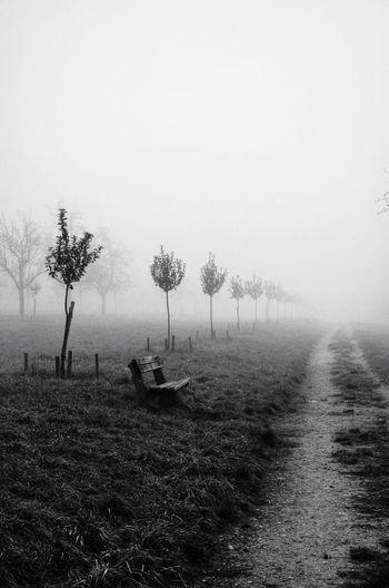 Empty Bench In Grassy Field In Misty Morning