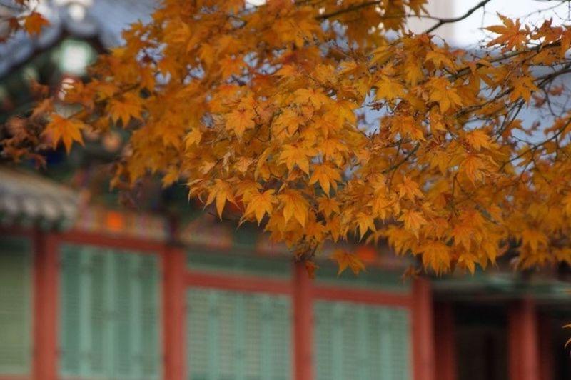 Seoul Seoul, Korea Travel Tree Deoksugung Deoksugung Palace