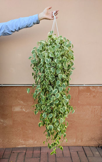 Midsection of person holding plant against wall