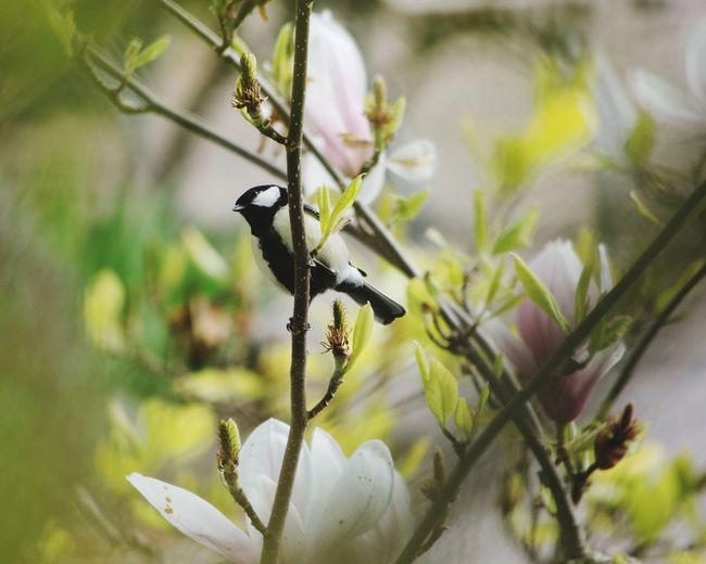 Frühlingserwache