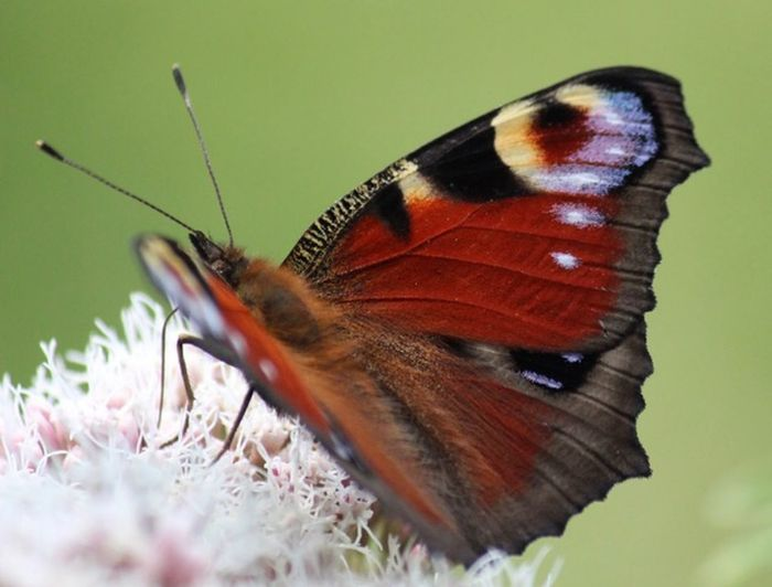 Butterfly One Animal Animal Wildlife Animal Themes Invertebrate Insect Animals In The Wild Animal