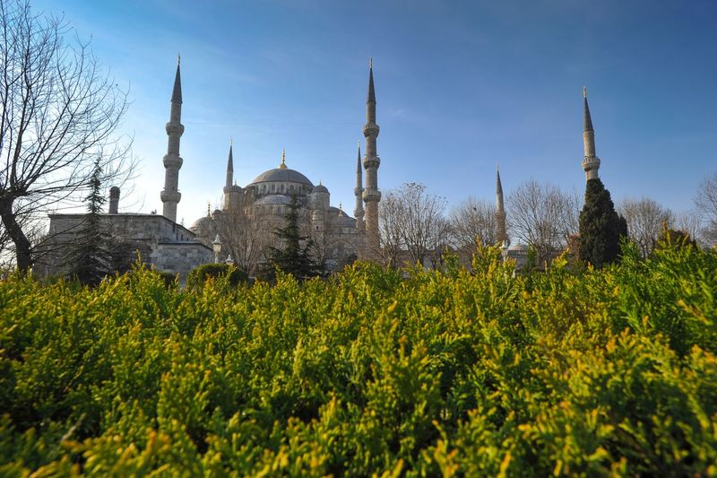 Low angle view of blue mosque and plants against clear sky