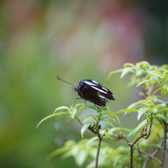 Ilmu Pengetahuan Alam Natural ALaM Animal Themes Animal Wildlife Animals In The Wild Beauty In Nature Biological Close-up Day Focus On Foreground Fragility Freshness Growth Insect Insects  Kupu-kupu Nature No People One Animal Outdoors Pelajaran IPA Perching Plant Serangga