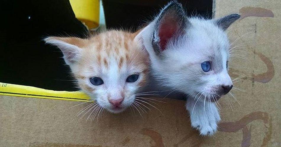 Joca & Zico Babycat Babylove Cats_of_instagram