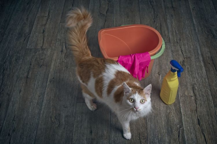 Cute tabby cat beside cleaning equipment looking innocent to the camera.