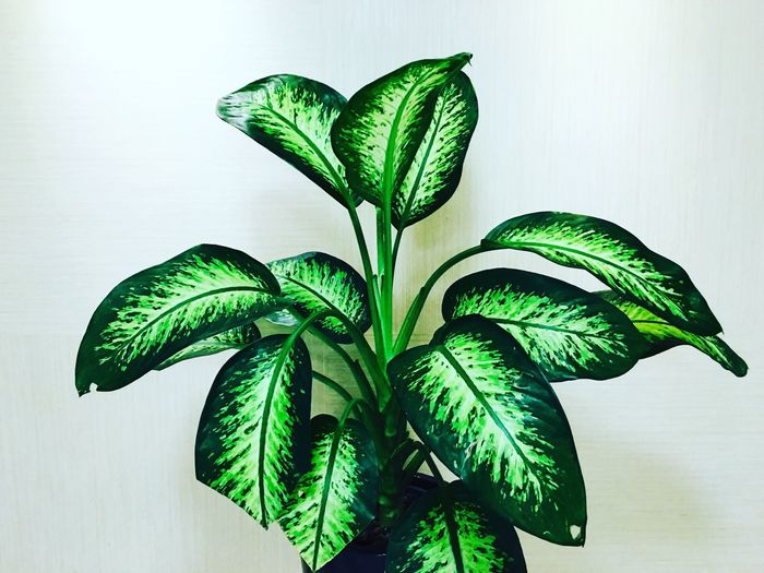 Green Plant Plants 🌱 Plants Tree Wall Flower