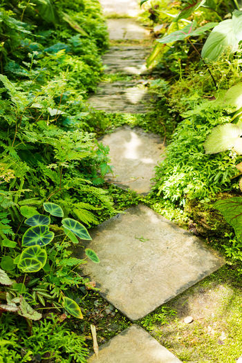 High angle view of footpath amidst plants in garden
