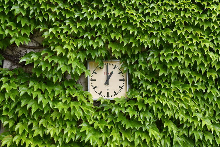 Clock amidst plants against trees