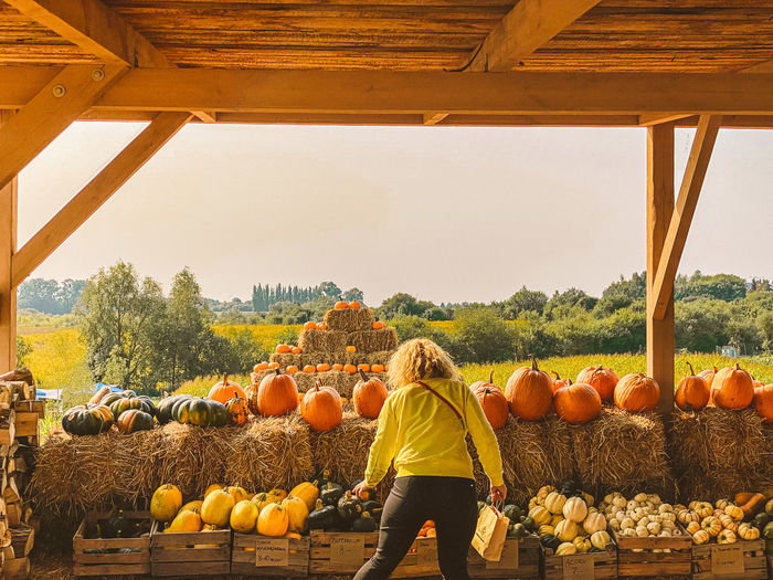 Rear view of woman standing by pumpkins in farm against sky