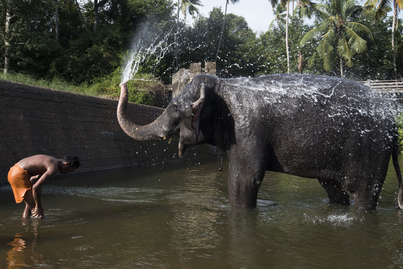 Bath Bathing Caretaker Elephant Fun Kanyakumari Mamal Outdoors People Shower Thirparappu Falls Water Welcome To Black Live For The Story