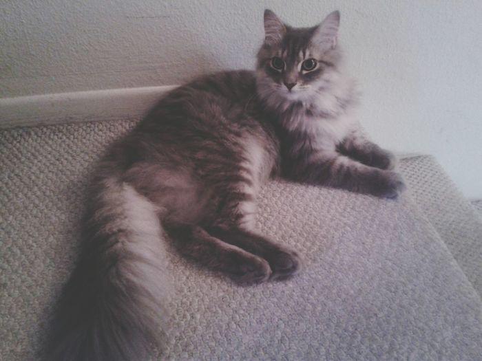 here Kitty Kitty Kitty lol