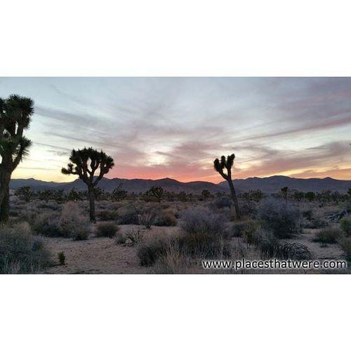 Sunset over Joshua Tree Joshuatree California Ryanranch Rurex Sunset Desert