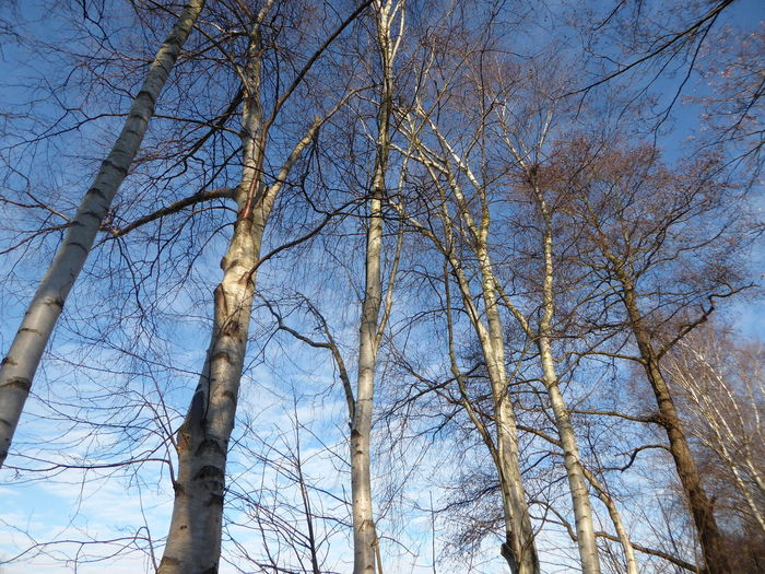 Birches And Blue Sky😍 Tranquil Scene Beauty In My Every Day Life For My Friends 😍😘🎁 Tree Trunk The Way Forward Beauty In Winter😍 Outdoors Wintertime ⛄ Winter Hardy..i'm Not😄 Looking Up😍 Plants In Winter Brrrrrrrrr❄❄❄❄ Enjoying The View Tranquility Cold Temperature Frosty ⛄ Bicycling Bare Tree Light And Shadow Beauty In NatureRadlweg