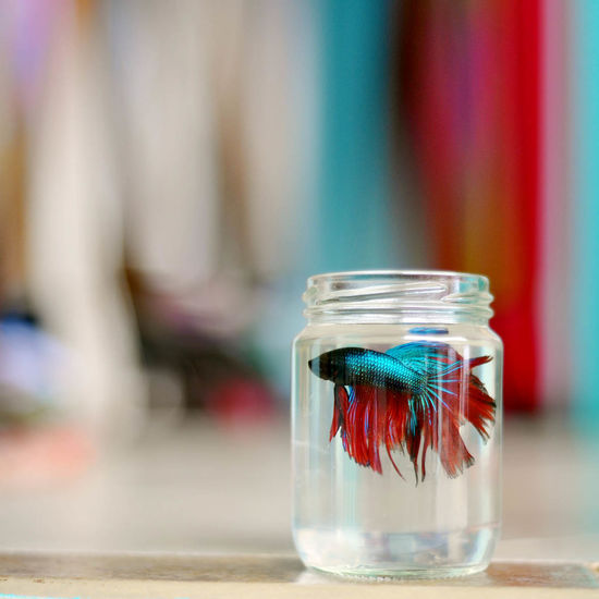 Bettas Bottle Close-up Fish Focus On Foreground Freshness Glass - Material Indulgence Jar Liquid Multi Colored No People Pink Color Red Refreshment Selective Focus Still Life