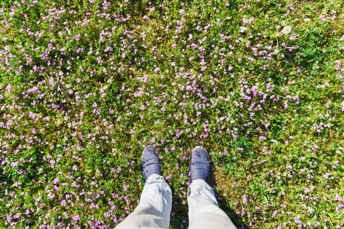 Man standing in a meadow with pink flowers, flortrait or footsie, shot in spring in Berlin, Germany. Beauty In Nature Berlin Casual Clothing Close-up Feet Flortraits Flowers Foot Footsie Footwear Germany Grass Green Human Foot Meadow Person Personal Perspective Pink Spring Sunlight Sunlit Unrecognizable Person