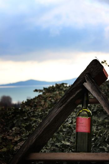 Wine Winetasting Winery Balaton Lake SunnyWinter Nature Badacsony View From Badacsony