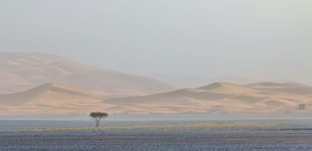 Lonely Tree 摩洛哥 Morocco Travelinafrica Landscape_Collection Landscape_photography Desert Beauty Sand Dune Sahara Desert Sahara Sand Deserts Around The World Desert Landscape Desert Mountain Arid Climate Rural Scene Landscape Tranquility Tranquil Scene