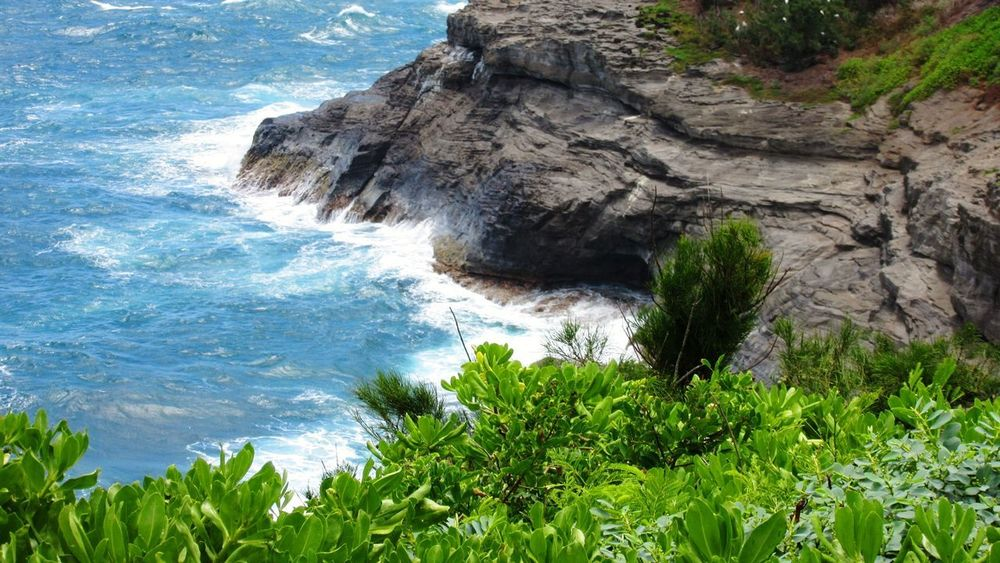 Blue Water White Water Ocean Albatross Hill Waves, Ocean, Nature Water Tree Sea Wave Blue Beach Rock - Object Rock Formation Sky Horizon Over Water Crashing Cliff Natural Arch Coast Tide Geology Physical Geography Rugged Eroded Rock Rocky Coastline