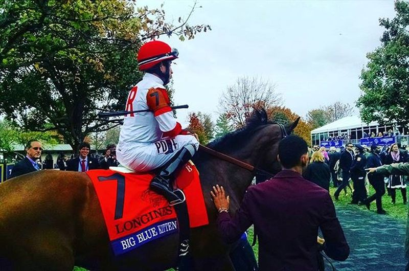 Bigbluekitten at the Breederscup at Keeneland Selfie Fall Turf Paddock Lexington Autumn Thoroughbredracing Horserace Fallingleaves RamseyFarm Lex Thoroughbred Kittensjoy Selfies Like4like Thoroughbredhorse Likeforlike