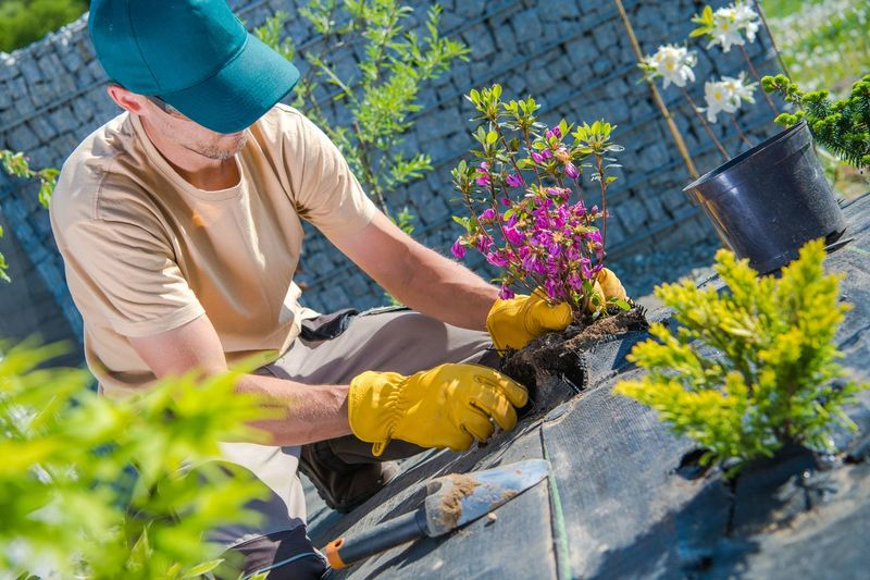 Mid adult man planting flowers at garden