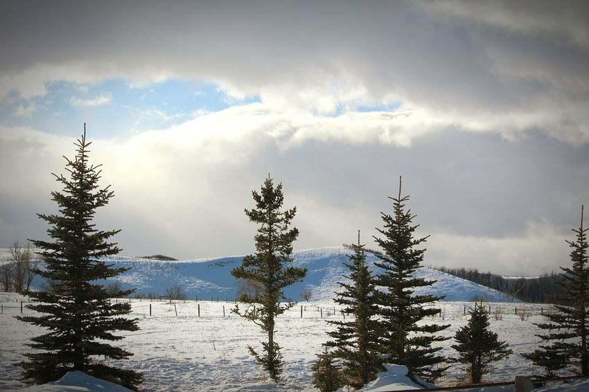 Eeyem Photography Hi! Eyem Gallery Relaxing Mother Natures Beauty... No People , WINTER Hello World Check This Out