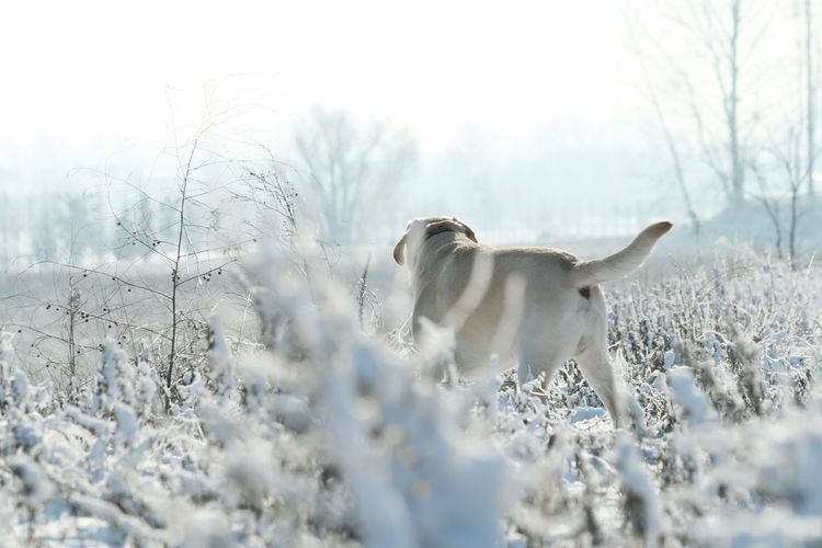 White horse on snow covered land