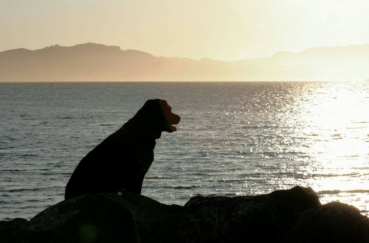 Silhouette Dog On Rock By Sea Against Sky During Sunset