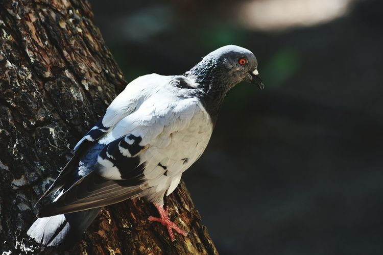 Close-up of pigeon on tree trunk