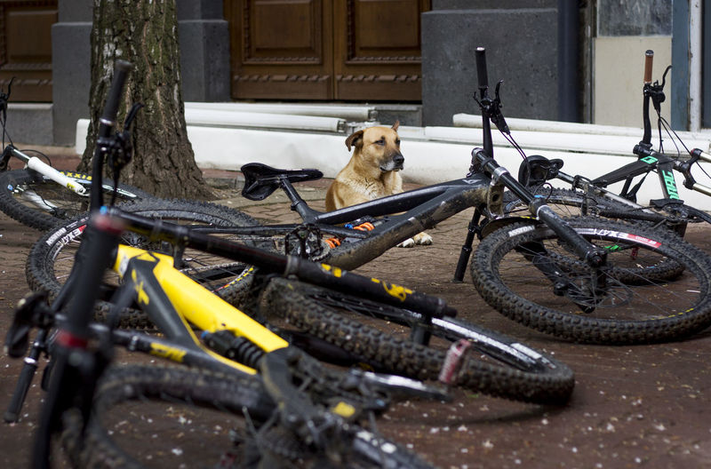 Dog on bicycle in city