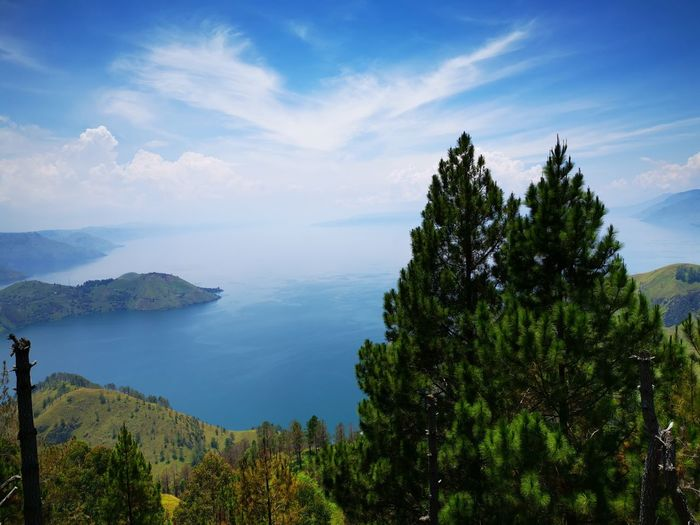 Beautiful Toba Lake Tree Water Forest Pine Tree Pinaceae Tree Area Blue Mountain Sky Landscape