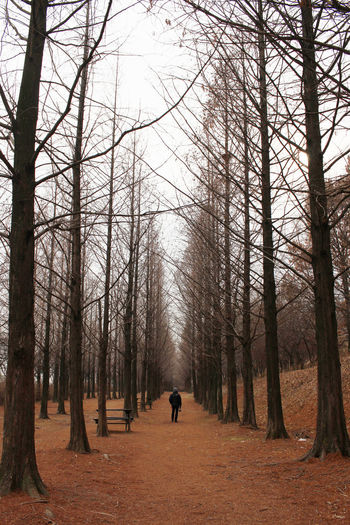 Man walking on bare trees in forest