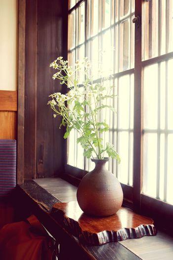 Ogagiku EyeEm Best Shots EyeEm Premium Collection Eyeem Premium Nostalgia Tradition Symbol Chamomilla Vase
