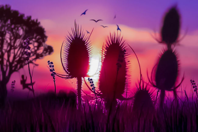 Purple Sunset Nature Plant Growth No People Silhouette Beauty In Nature Outdoors Sky Close-up Flower Fragility Saguaro Cactus Day Photoshop Photo Editor Pro Photographylovers Photography Photoart Beauty In Nature Tranquility Photographer Photographing Photography Progression