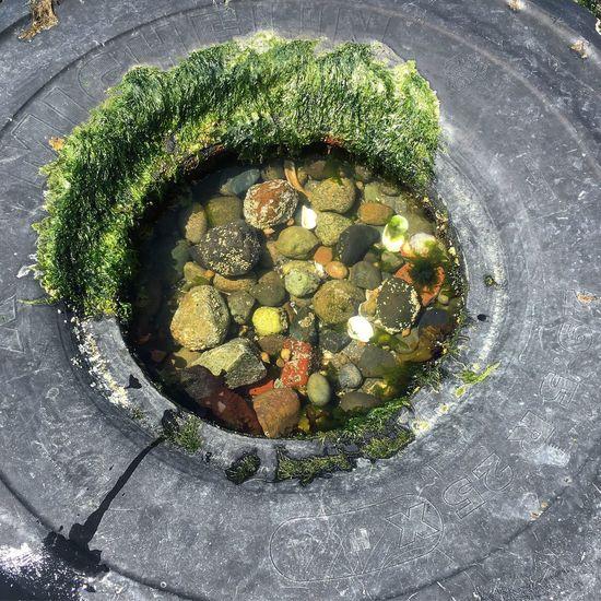 Seattle Directly Above Outdoors Marine Ecosystem Marine Life Algae Growth Tire Nature