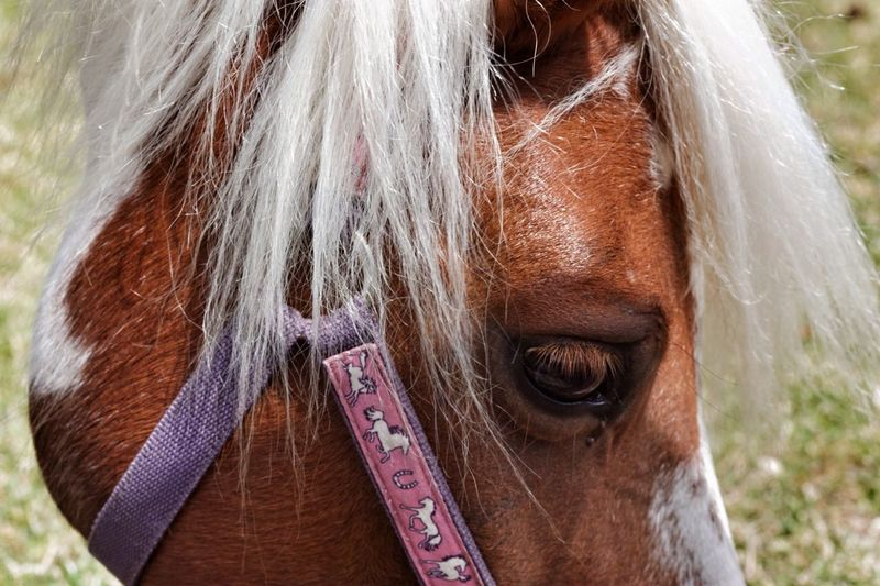 Yes, I had it Bleached . Like ? ❤ Horse Power