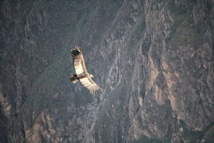 Bird flying over a mountain