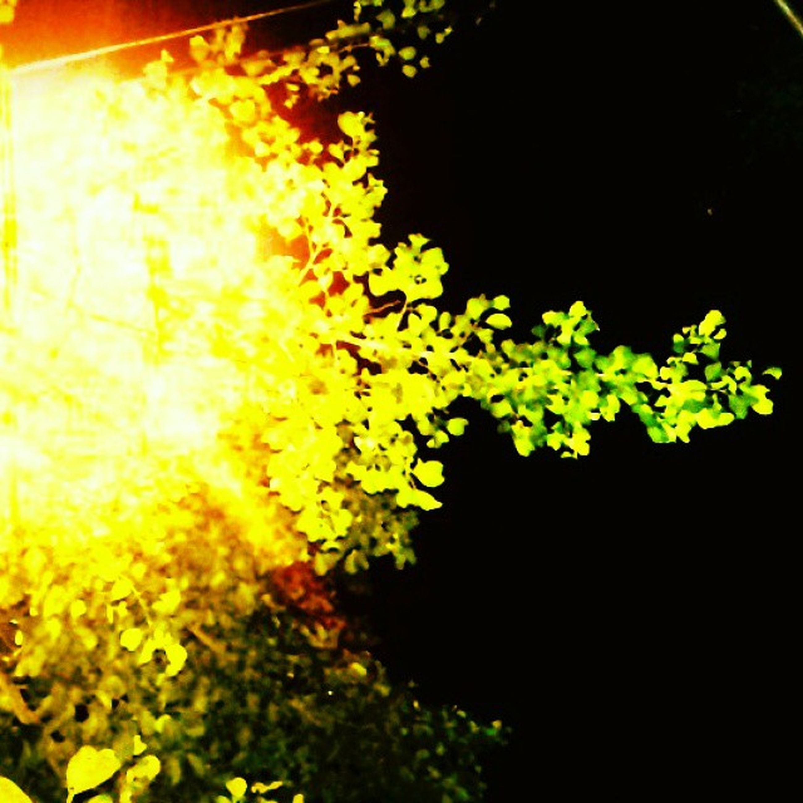 night, growth, leaf, yellow, plant, nature, tree, dark, close-up, illuminated, beauty in nature, no people, tranquility, selective focus, green color, outdoors, sunlight, branch, light - natural phenomenon