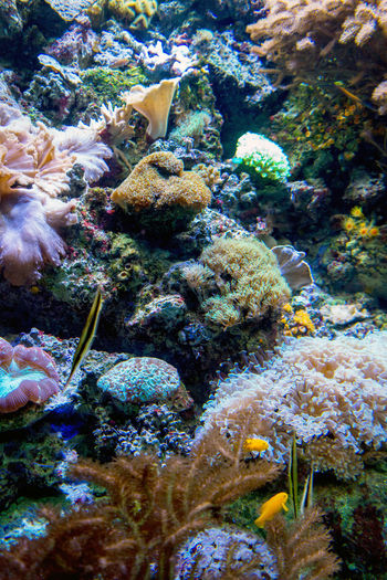 beautiful and colorful fish swim in coral and living rock in a underwater sea world Fish Species Swimming Tropical Fish Anenomeshrimp Animal Animal Themes Animals In The Wild Beauty In Nature Colorful Coral Fish Fishing Flowers Invertebrate Live Rock Marine Nature Saltwater Aquarium Sea Sea Life Swimming UnderSea Underwater Vertebrate Water