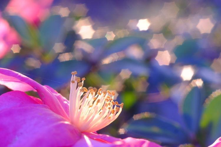 Taking Photos Industar61 Bokeh Flowers Flowers,Plants & Garden EyeEm Best Shots - Flowers Nature EyeEm Best Shots EyeEm Flower Flower Colorful Taking Photos Nature_collection