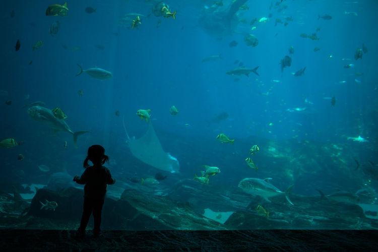 Underwater view of fish swimming in aquarium