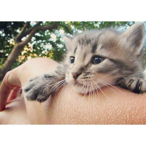 Animal Cat Beautifulday Beautifulanimals sweet garden catstigrottoocchiazzurri postmycatmeow