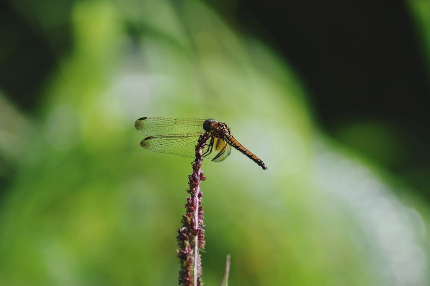 EyeEm Selects Insect Focus On Foreground Animal Wildlife Animals In The Wild Day One Animal Outdoors Nature Green Color No People Animal Themes Damselfly Perching Close-up