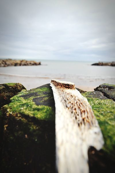 Sea View Sea No People Wood Piece Of Wood Outdoors Beach Close-up Texture